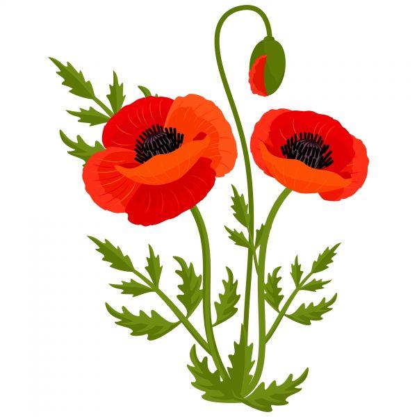 Clip Art Poppy Flowers