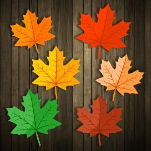 Thanksgiving decoration autumn maple leaves