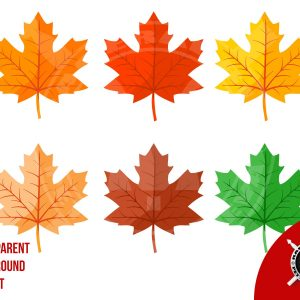 Autumn maple leaves vector illustrations thanksgiving
